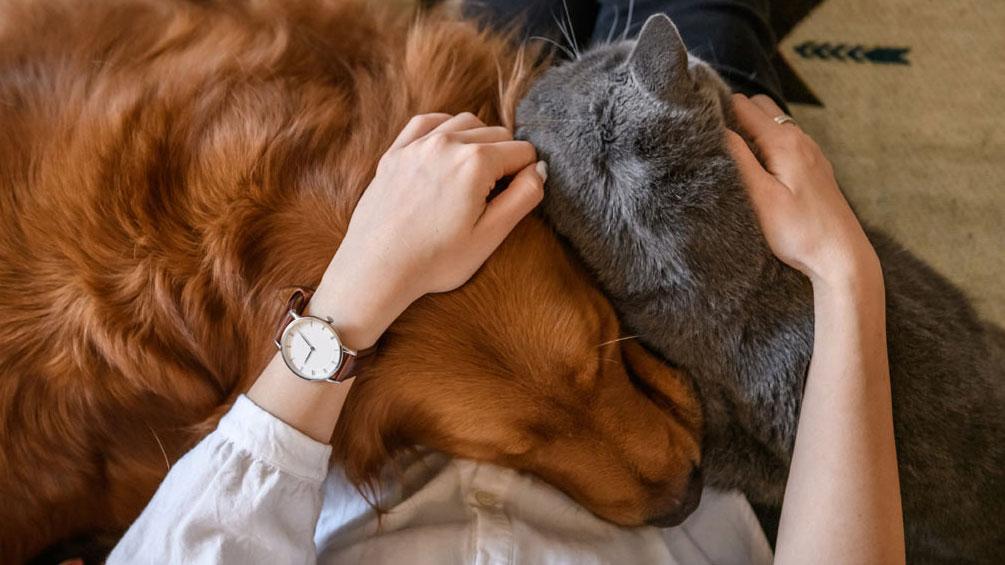 Koiran Vakuutus